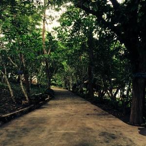 Le chemin s'enfonce sous les arbres dans l'enceinte du Wat Pa Phon Phao, un lieu propice à la réflexion. (Luang Prabang, Laos, août 2014)